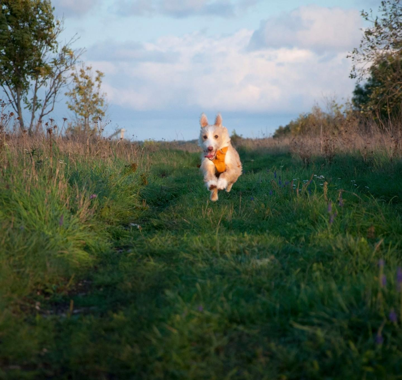 Elu primitiivse* koeraga